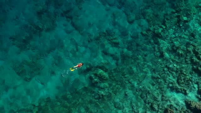 snorkeling in clear turquoise sea - televisione a ultra alta definizione video stock e b–roll