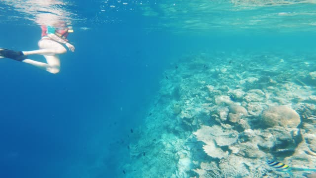 snorkeling in maldives sea - life belt stock videos & royalty-free footage
