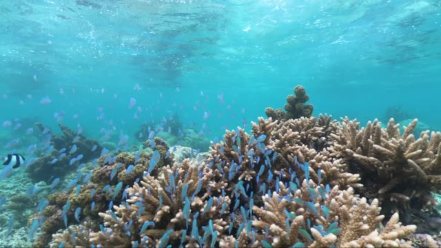 snorkeling in the beautiful sea of mauritius protected by the reef on the indian ocean - coral stock videos & royalty-free footage