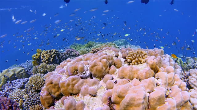 Snorkeling on beautiful coral reef with lot of tropical Fish on Red Sea nearby Marsa Alam
