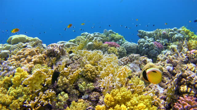 snorkeling on shams alam coral reef / red sea - reef stock videos & royalty-free footage