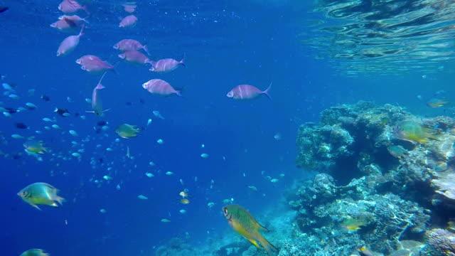 snorkeling on tropical coral reef / maldives - dykarperspektiv bildbanksvideor och videomaterial från bakom kulisserna