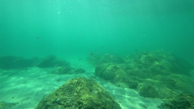 Plongée libre point de vue: une mer Méditerranée autour de Corse