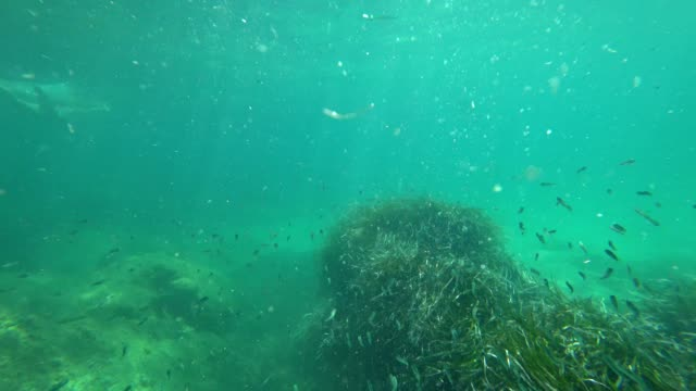 schnorchel gesichtspunkt: klare mittelmeer rund um korsika - unterwasserkamera stock-videos und b-roll-filmmaterial