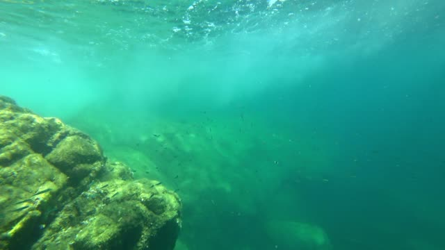 snorkeling point of view: clear mediterranean sea around corsica - undersea stock videos & royalty-free footage