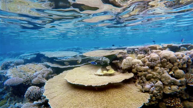 Snorkeling slow motion on coral reef / Maldives