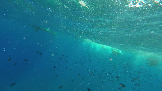 vídeos y material grabado en eventos de stock de snorkeling with fish, a woman and her children - territorios franceses de ultramar