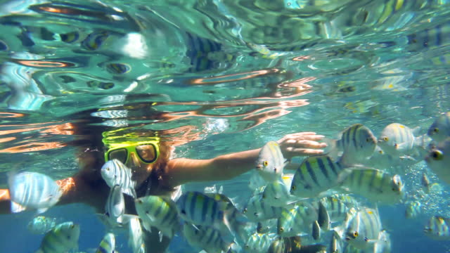 Snorkeling woman in red sea, around tropical fishes.