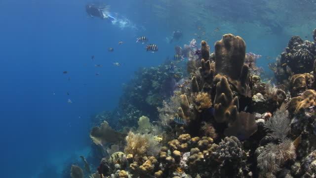snorkler and a coral reef, utila bay islands honduras - aqualung diving equipment stock-videos und b-roll-filmmaterial