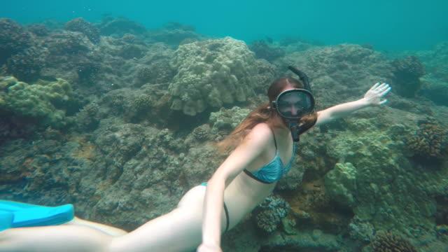 vídeos de stock e filmes b-roll de snorkling - havai