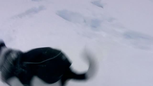 vidéos et rushes de aventure de neige - terrier jack russell