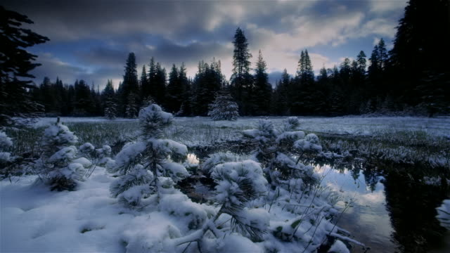 Snow and evergreen forest, California