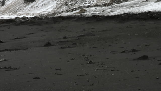 snow and hailstones are blown across a black beach in iceland.  - black sand stock videos & royalty-free footage