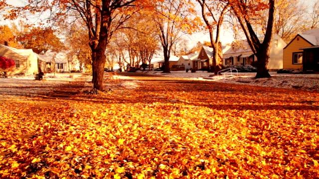 雪とオレンジの葉 - 数個の物点の映像素材/bロール