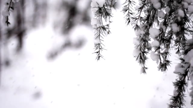 snow and swaying branches (loopable) - snowing stock videos and b-roll footage