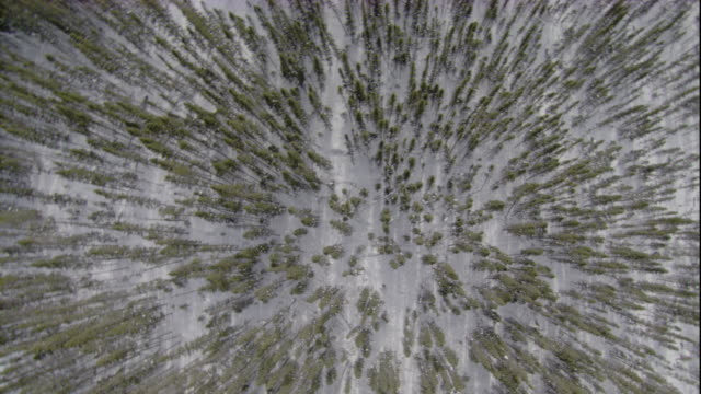 snow blankets a boreal forest. available in hd. - boreal forest stock videos and b-roll footage
