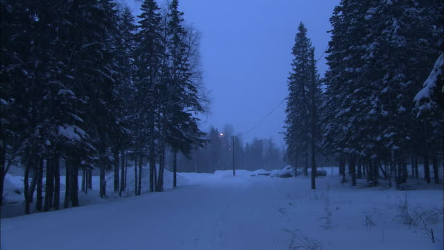 Snow blankets an evergreen forest in Haparanda, Sweden.
