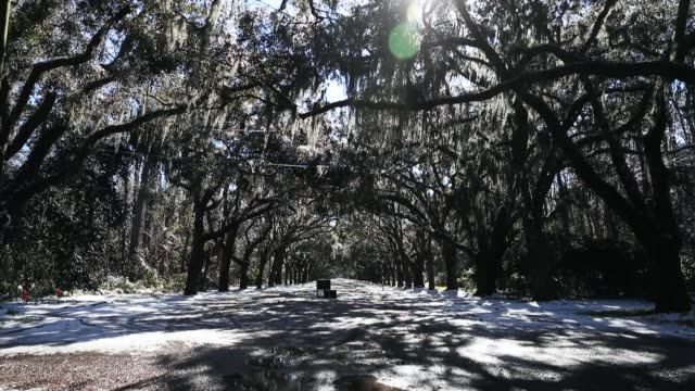 stockvideo's en b-roll-footage met snow blankets the driveway to wormsloe historic site after yesterday's snow storm on january 4 2018 in savannah georgia from maine to florida every... - georgia us state