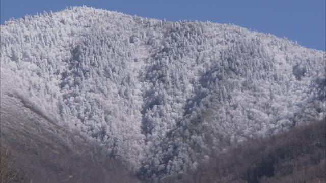 snow blankets the heavily wooded slopes of the appalachian mountains. - appalachia stock videos & royalty-free footage