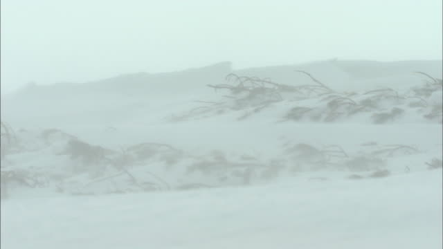 snow blizzard_daisetsuzan volcanic group in winter, hokkaid_ - blizzard stock videos & royalty-free footage