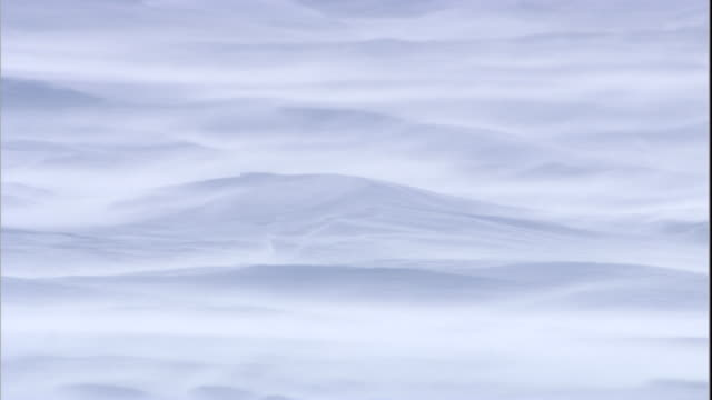 snow blows across rippled tundra in arctic canada. available in hd. - arctic stock videos & royalty-free footage