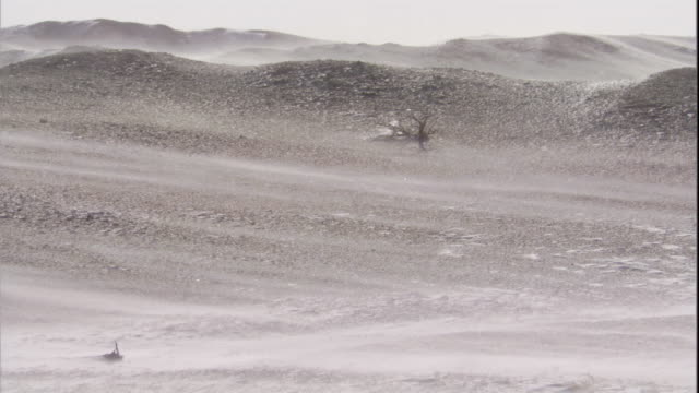 snow blows in gobi desert, mongolia available in hd - duna video stock e b–roll