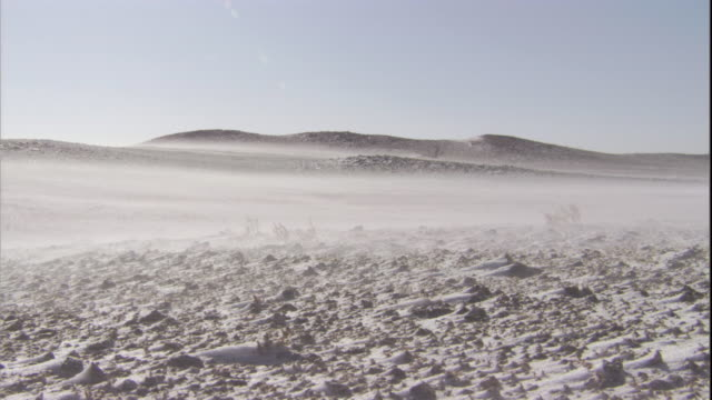 stockvideo's en b-roll-footage met snow blows in gobi desert, mongolia available in hd - mongolië