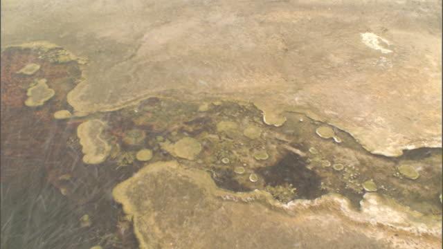 "vidéos et rushes de snow blows onto algal mat at edge of hot spring, yellowstone, usa - ""bbc natural history"""