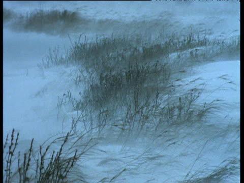 Snow blows over grass, Churchill