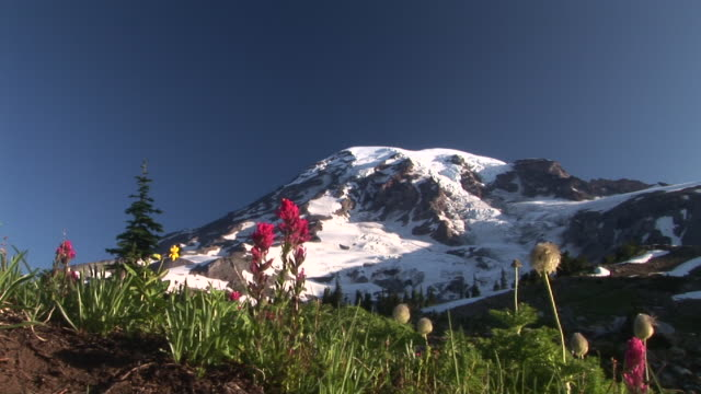 ws, snow capped mount rainier with flowering meadow in foreground, mount rainier national park, washington, usa - alm stock-videos und b-roll-filmmaterial