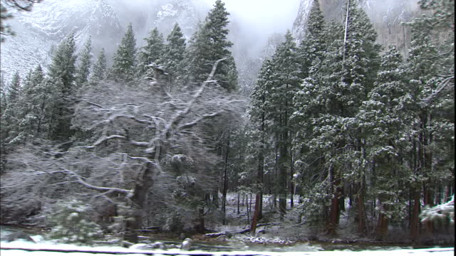 Snow clings to bare tree branches and evergreen boughs in Yosemite National Park.