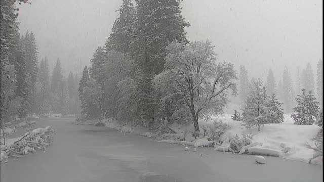 snow clings to bare tree branches and evergreens beside the frozen merced river in yosemite valley. - californian sierra nevada stock videos and b-roll footage