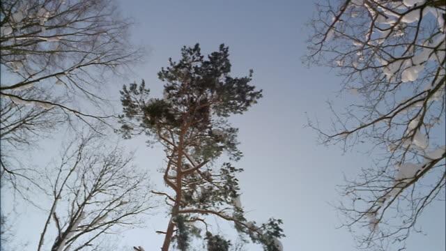 vídeos de stock, filmes e b-roll de snow clings to bare tree branches. - bare tree