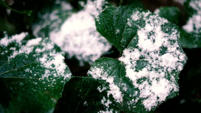 snow cover leaf - icicle stock videos and b-roll footage