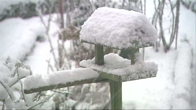 vídeos y material grabado en eventos de stock de snow covered bird table - baño para pájaros