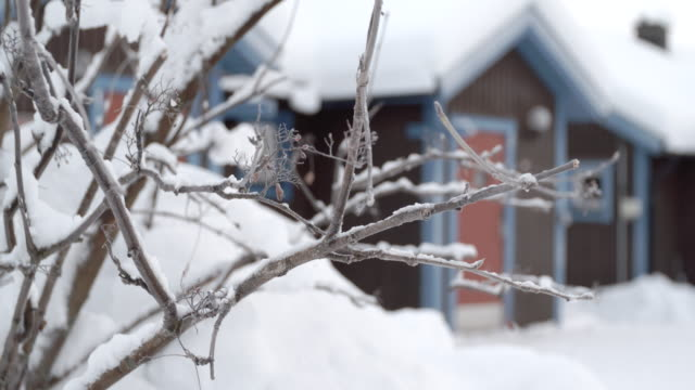 snow covered branches and chalets / jukkasjarvi, sweden - chalet video stock e b–roll
