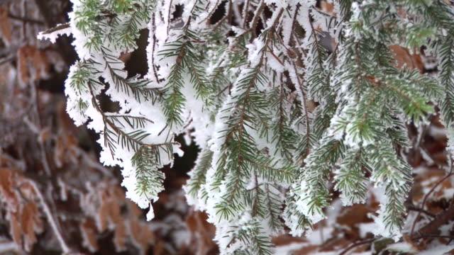 vídeos y material grabado en eventos de stock de hd: ramas cubierto de nieve - fundido en negro