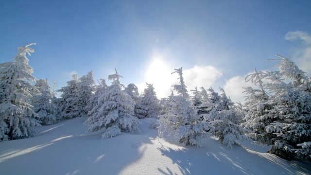 vídeos de stock e filmes b-roll de snow covered coniferous trees with halo and sun in winter, mount fichtelberg, oberwiesenthal, erzgebirge, ore mountains, saxony, germany, europe - coniferous