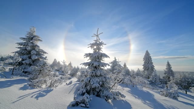 snow covered coniferous trees with halo and sun in winter, mount fichtelberg, oberwiesenthal, erzgebirge, ore mountains, saxony, germany, europe - nadelbaum stock-videos und b-roll-filmmaterial