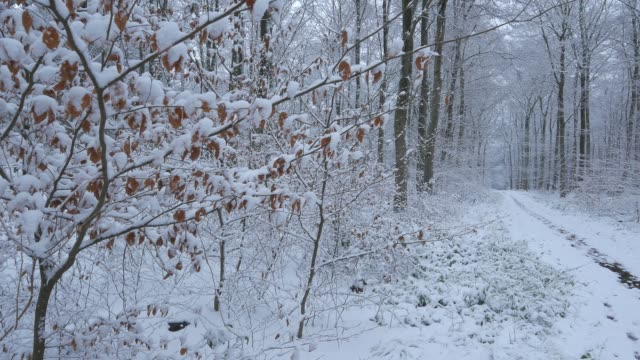 snow covered forest in winter, freudenburg, rhineland-palatinate, germany, europe - rhineland palatinate stock videos & royalty-free footage