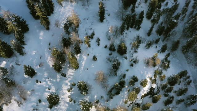 snow covered forest - 北チロル点の映像素材/bロール
