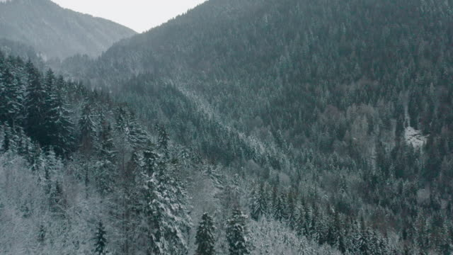 snow covered forested mountains - snow stock videos & royalty-free footage