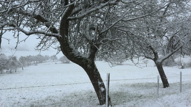 snow covered fruit trees in winter - establishing shot stock videos & royalty-free footage