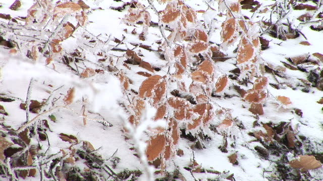 hd: snow covered leaves - swaying stock videos & royalty-free footage