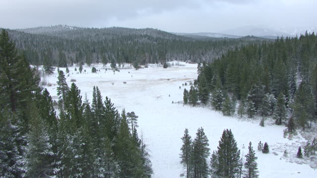 stockvideo's en b-roll-footage met ws aerial pov snow covered meadow with pine forest in northern sierra nevada / california, united states - conifeer
