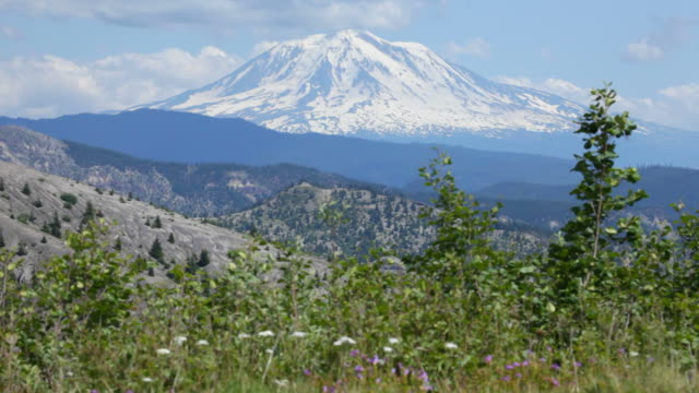 snow covered mount adams washington and wildflowers - cascade range stock videos & royalty-free footage