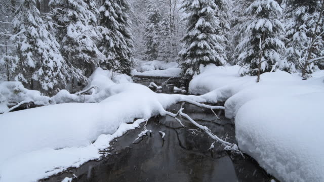 snow covered mountain river kleine ohe. kleine ohe, bavarian forest national park, bavaria, germany. - 深い雪点の映像素材/bロール