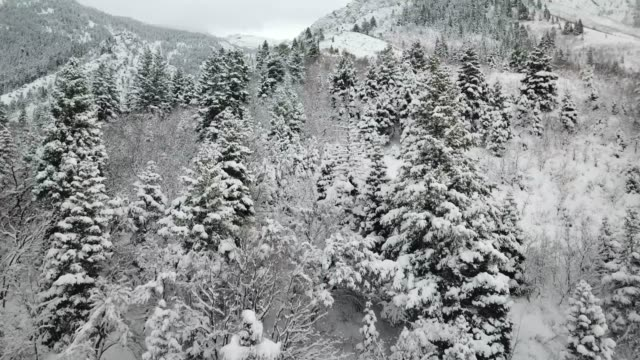 snow covered mountains - pinaceae stock videos & royalty-free footage