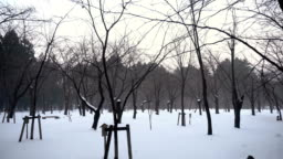 Snow Covered Nature and Trees in Park