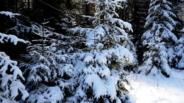 vídeos de stock e filmes b-roll de snow covered pine trees on sunset - pine